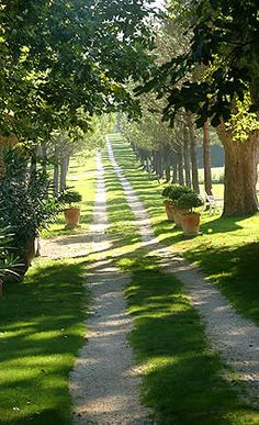 Inspiration for entryway to the farm; tree-lined country road of Chateau Talaud, Provence