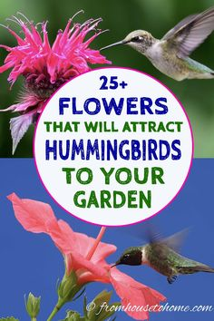 These hummingbird plants are the best bushes, perennials, annuals and vines for your hanging baskets and hummingbird garden. There are flowers for every type of front and backyard - sun, shade, drough Hummingbird Flowers, Hummingbird Garden, Hummingbird Food, Shade Plants, Cool Plants, Flowers That Attract Hummingbirds, Attracting Hummingbirds, Ivy Geraniums, Tuberous Begonia