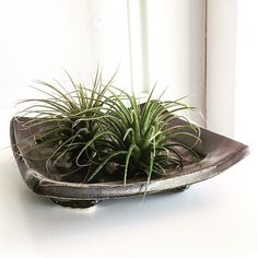 These small trays make great homes for #airplants. These Tillandsia Ionantha have been thriving in our shop! Just soak them in water for 30 minutes once a week and keep them in bright indirect light and thats it! You can pick up a tray air plant or both in our shop or in our #Etsyshop!! Link in profile! ------------------------------------------------#indoorgardening #houseplants #holidaygifts #pottersofinstagram #instapottery #ceramicsmagazine #eastwheelingclayworks #pottery #ceramics…