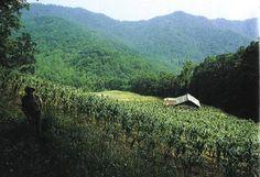 Farm in the Appalachian Mountains