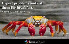 sally lightfoot crab on rock on isla fernandina galapagos islands ecuador Quotes To Live By, Me Quotes, Motivational Quotes, Inspirational Quotes, Leader Quotes, Monday Quotes, Qoutes, Entrepreneur, Eating Quotes