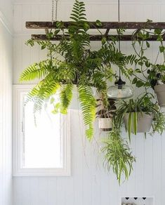 Use the hanging pots and pans holder that normally goes in the kitchen and hang it inside the bathtub and the spare bathroom… That way I can have plants and the tub and stuff can still be usable for baths