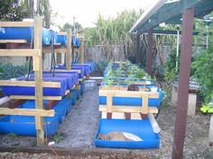 DIY Backyard Aquaponics System | Visit my personal DIY Aquaponics setup at http://www.davaoaquaponics.com/blog/