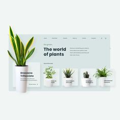 Design and animation with Adobe XD of a website showing top 5 of plants of the week. User experience and user interface clean. Website Design Inspiration, Best Website Design, Website Design Layout, Wordpress Website Design, Layout Design, Website Designs, Website Ideas, Motion Design, Layout Web