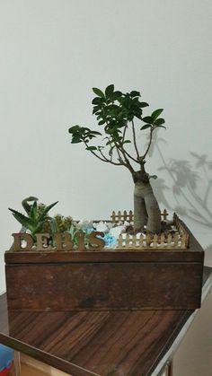 #succulents #terrarium #succulent #diy #miniaturegarden