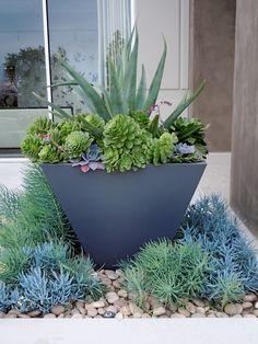 Gorjuss Succulent Container Garden