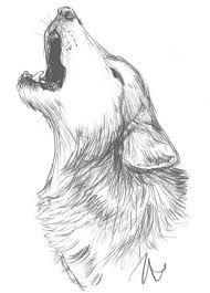 Kết quả hình ảnh cho wolf drawing