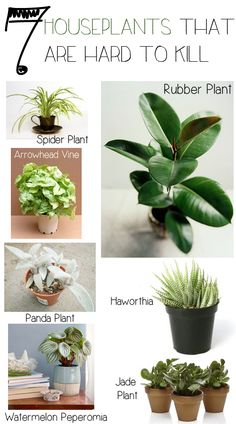 Never kill a houseplant again! Instead of going for the easy-to-kill houseplants. Decorate with one of these plants and save yourself the heartache of killing another plant ;)