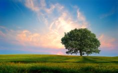 photos of nature | Fresh Nature Wallpapers, Fresh Nature Download, Fresh Nature Pictures