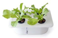 How to Build Indoor Hydroponic Gardens Using IKEA Storage Boxes | Urban Gardens