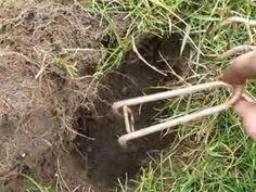 J'explique dans cette vidéo comment utiliser les piègesqui pincent les taupes. Réussite garantie (J'ai attrapé dans mon jardin 31 taupes en 1 an).