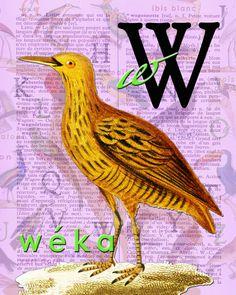 W for WÉKA.Alphabet Ornithology print art par BerniesArtPrints