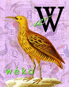 W for WÉKA.Alphabet Ornithology print art par BerniesArtPrints