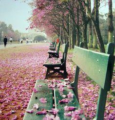 Parque Farroupilha (Redenção) - Porto Alegre /j'aimerais tellement me promener dans ce parc ou un autre avec mes Lu... :-)