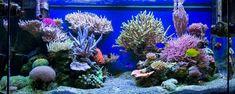 Reef Tanks | Search More: finnish • Jafar • Jafarin • reef tank