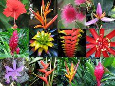 flora del amazonas - Buscar con Google