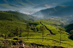 I WANT TO BE HERE! Kerala, India
