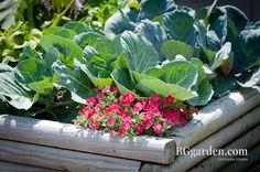 Veggies and Blooms