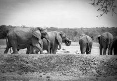 Tangala Safari Camp | Specials 4 Africa