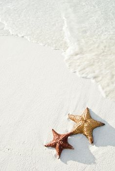 Aruba starfish, white sand and rolling tide.