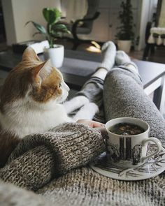 As your day of relaxation winds down, spend some time relaxing on a comfy couch with your cat. They'll be happy to curl up with you and get some extra pets, and they might even get so relaxed that they drift off to sleep.