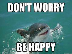 Celebrate Shark Week With Misunderstood Shark! Cute Shark, Great White Shark, Animal Jokes, Funny Animals, Adorable Animals, Animals Beautiful, Shark Jokes, Shark Humor, Funny Cute