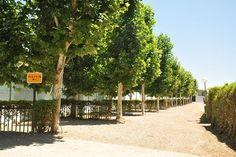 cordoba municipal camp el brillante Spain, Country Roads, Cordoba, Glow, Sevilla Spain, Spanish