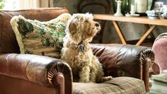 """Meg on a revamped leather armchair: """"It was terribly tatty so I used the leather cushion to patch the arms and made a ..."""