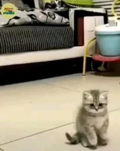 Interstellar ending debunked 😁😜🤣 - Welpen Cute Funny Babies, Funny Cute Cats, Cute Cat Gif, Cute Cats And Kittens, Cute Funny Animals, Baby Cats, Cute Baby Animals, Kittens Cutest, Chien Golden Retriever