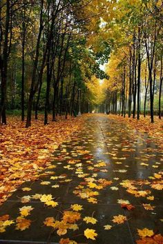 Romántico y bello otoño