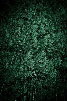 Rachael Alexandra - Google+ - The night I tried to capture the wind.