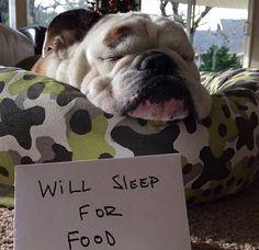 Will Sleep For Food