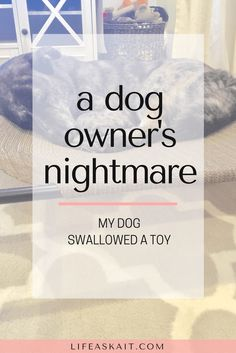 dog swallowed a toy,