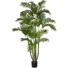 Areca Palm Silk Tree, 5'