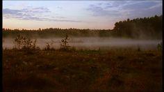Ostpreußens Wälder: Land der Wisente, Wildpferde und Störche, Moor, Poland, Fog (Weather), Morning, Forest, Stock Footage,