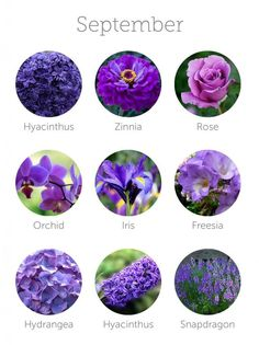 Wedding Budget wedding flowers in season - september - Want to save money on your wedding floral budget? Make sure to choose in-season flowers for your wedding bouquet, centerpieces or other floral arrangements. Wedding Flower Guide, Purple Wedding Flowers, Floral Wedding, Fall Wedding, Trendy Wedding, Wedding Table, Purple Flower Names, Small Purple Flowers, Lavender Flowers