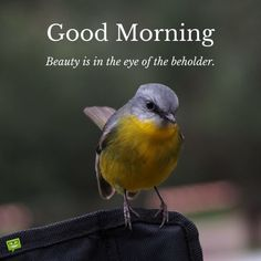 Looking for for images for good morning motivation?Browse around this site for cool good morning motivation inspiration. These amuzing pictures will make you enjoy. Motivational Good Morning Quotes, Happy Morning Quotes, Morning Quotes Images, Good Morning Images Hd, Good Morning Funny, Morning Greetings Quotes, Good Morning Sunshine, Good Morning Picture, Good Morning Messages