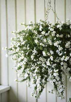 Container gardening is a fun way to add to the visual attraction of your home. Cottage Garden Plants, Garden Planters, Window Planters, Moon Garden, Dream Garden, Plants For Hanging Baskets, Hanging Basket Garden, Bloom Where Youre Planted, Pot Plante