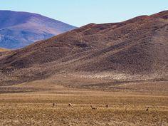 Vicunas Argentinië Salta Monument Valley, Road Trip, Nature, Travel, Salta, Naturaleza, Viajes, Road Trips, Destinations