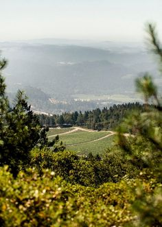 Melka Wines Knights Valley Sauvignon blanc vineyards