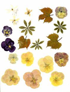 press flowers microwave | FLOWER PRESSING INSTRUCTIONS : PRESSING INSTRUCTIONS - BEAUTIFUL FAKE ...