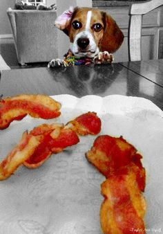 Charlie loves bacon
