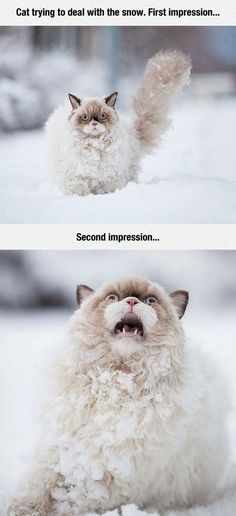 Cat And Snow - You can't help but laugh at the expressions....  this is how i feel about snow