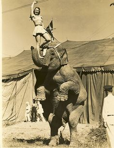 Show Must Go On, Behind The Scenes, The Roaring was a time of speakeasies. Old Circus, Circus Art, Night Circus, Circus Theme, Vintage Circus, Circus Birthday, Birthday Parties, Vintage Photographs, Vintage Images