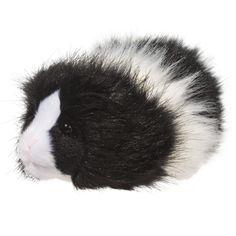 Douglas Angora Guinea Pig