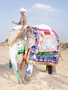 charles-freger-painted-elephants-11