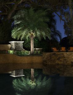 Our flagship lamp-ready spotlight, the All-Star is a premium solid cast brass fixture designed for flexibility, durability & performance. Patio Lighting, Tree Lighting, Landscape Lighting, Palm Tree Lights, Palm Trees, Cool Landscapes, Curb Appeal, It Cast, Backyard