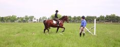Jumping Exercises for the Green or Spooky Horse - Horse Collaborative