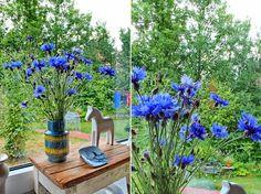 mano's welt: kornblumenblau