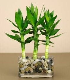 Asian plant containers for